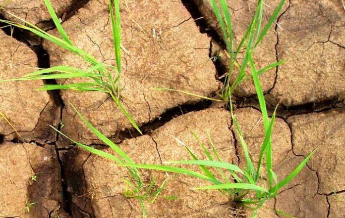 Одеські аграрії через суд вимагатимуть обіцяну компенсацію через посуху