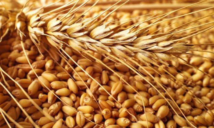 Підвищення якості життя людей та сталий розвиток агровиробництва – ключові цілі Стратегії продовольчої безпеки України