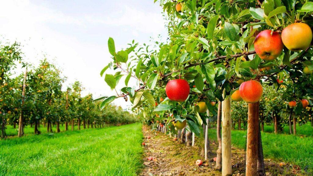 На Запоріжжі щорічно збільшують площу насаджень плодово-ягідних культур
