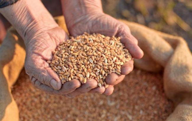 В умовах пандемії вітчизняний експорт насіння у 2020 році збільшився на 30,0 %, продемонструвавши найкращий за останні 10 років результат