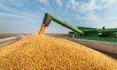 Узгоджено граничний обсяг експорту кукурудзи на 2020/2021 МР