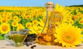 Закупівельні ціни на соняшник в Україні стрімко зросли