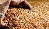 Українські експортери скоротили відвантаження зернових