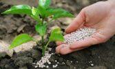 Виробництво азотних добрив в 2020 році досягло п'ятирічного максимуму