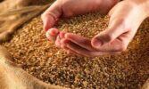 В Україні вироблено майже 65 млн. тонн зернових та зернобобових культур