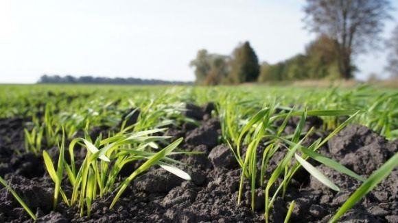 Значна частина озимих посівів потребує азотного підживлення