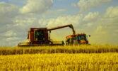 Види на урожай 2021 року зберігаються на високому рівні