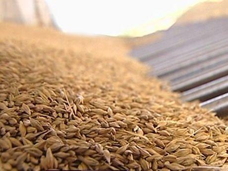Україна може в 2-3 рази збільшити експорт зерна в Китай – Горбачьов