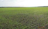 Прискорення сівби та прогнози опадів обвалили ціни на зерно