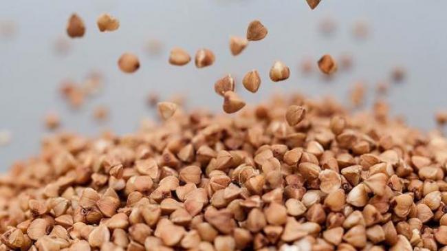 Україна втримує 100 % виробництва кондиційного насіння вітчизняної селекції лише по трьох зернових культурах – гречка, просо та овес