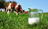 Компанія Baladna Co Q.P.S.C. (Катар) планує побудувати в Україні молочну ферму на 25 тис. голів