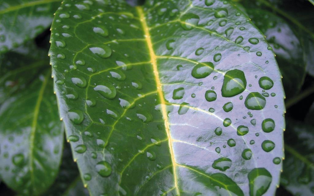 Дощування чи крапельне зрошення: що ефективніше?