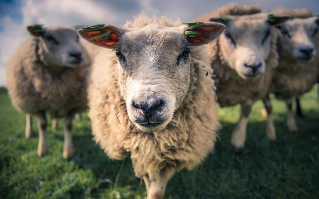 Україна та Йорданія погодили нову форму сертифікату на експорт живих овець