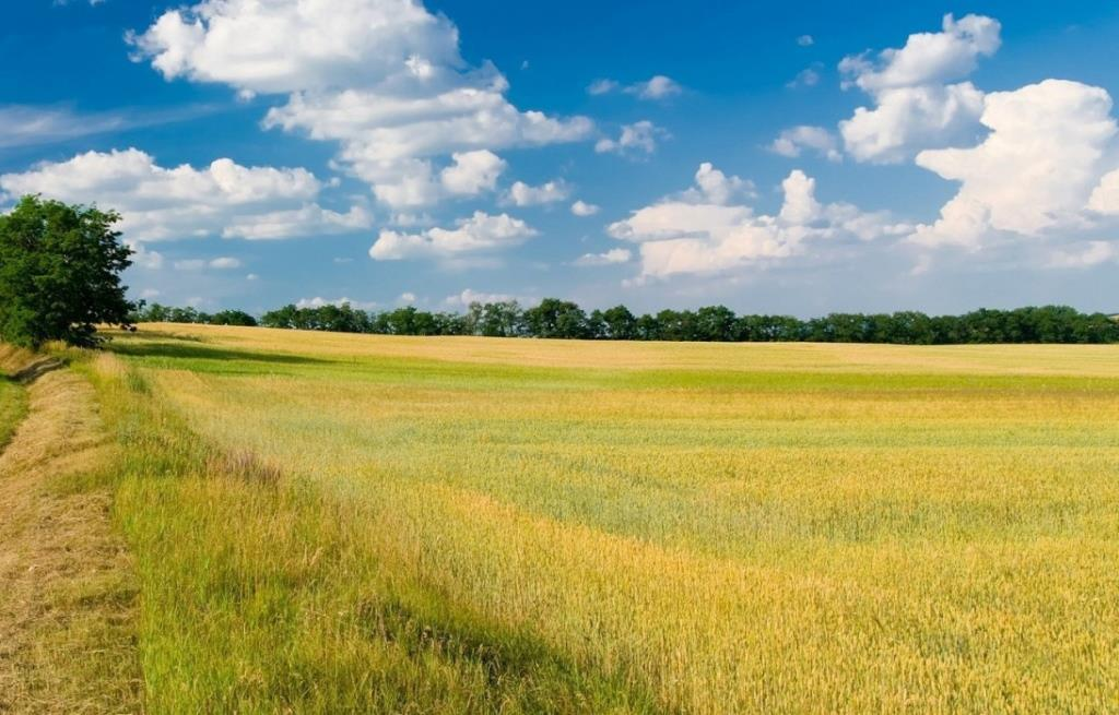Уряд працює над створенням Аграрного реєстру