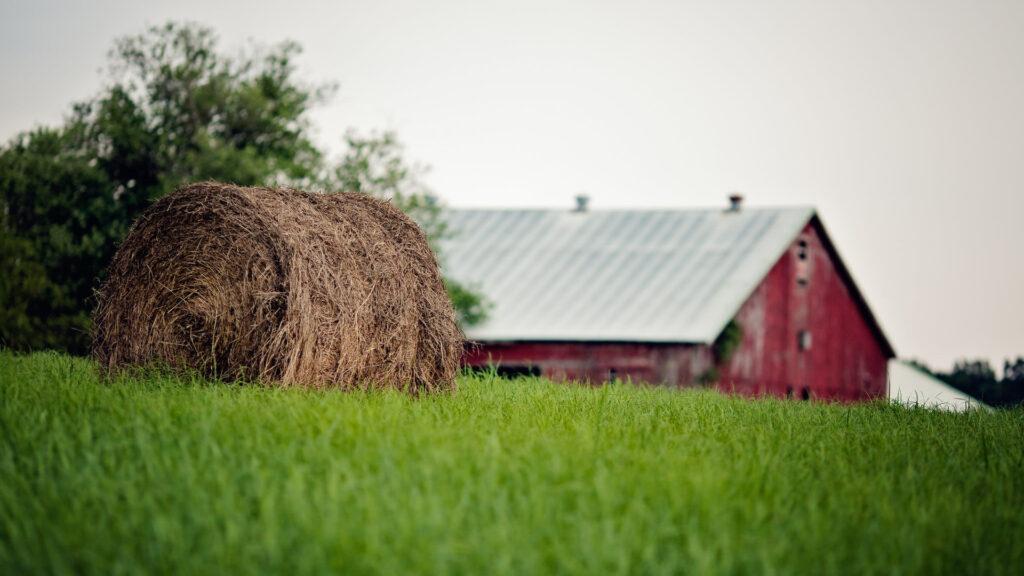 Набули чинності нові форми заявок на фінансову підтримку для фермерських господарств