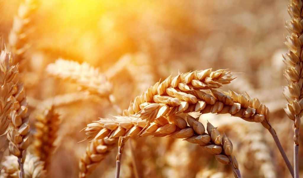 Україна готова до завоювання нових експортних ринків зерна