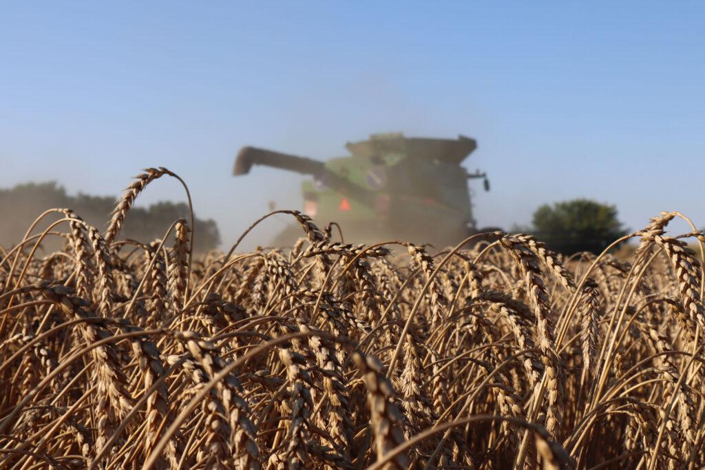 Урожай-2021: Запорізькі аграрії займають передові місця у загальноукраїнському рейтингу