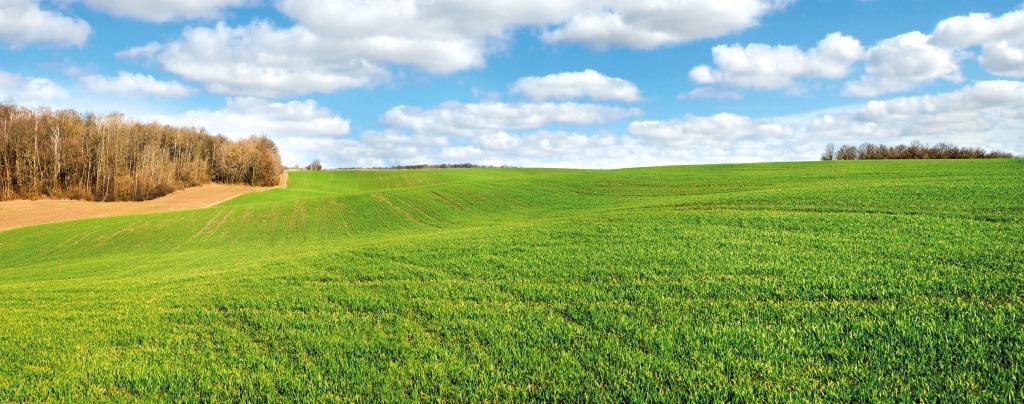 Як закласти основи високої продуктивності озимих зернових культур